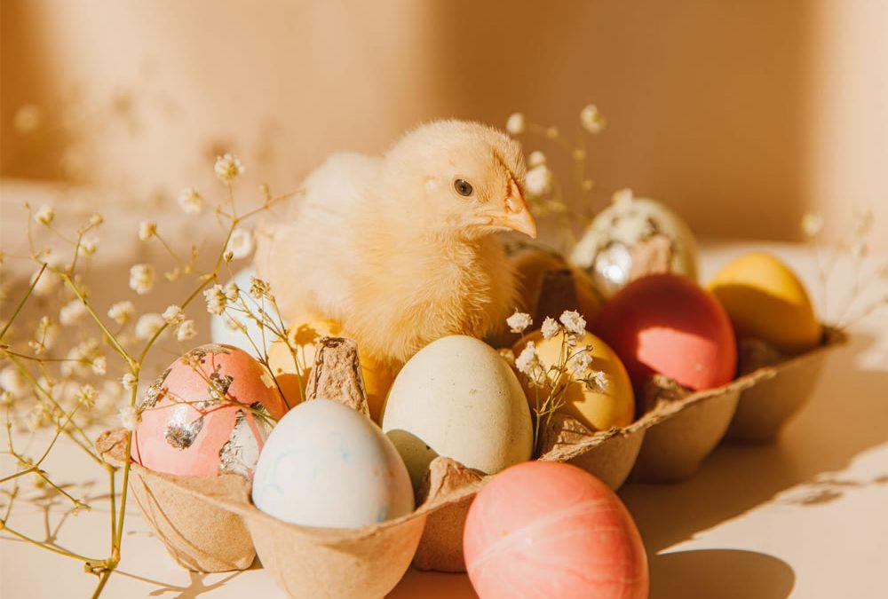 Buona Pasqua da PAMERCATO